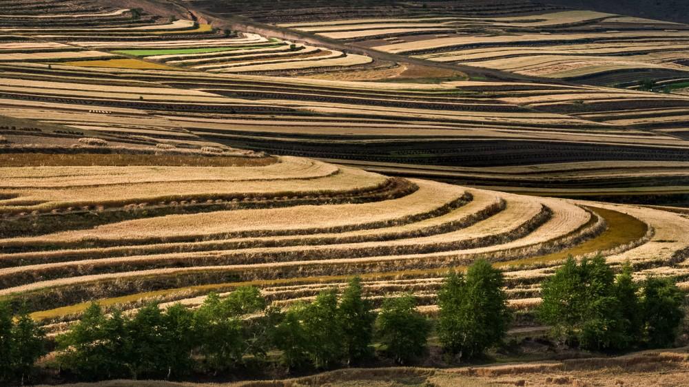 """三主粮""""杯——首届穿越中国燕麦谷摄影大展拟入展作品公示"""