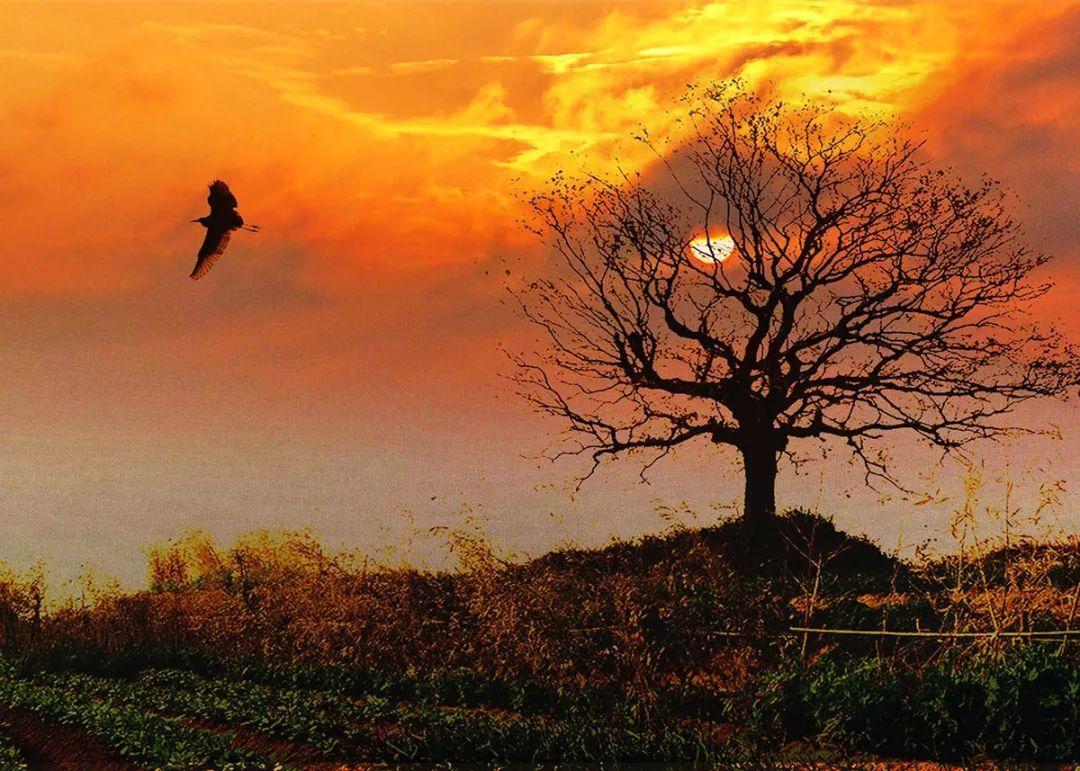 乡愁就是家乡那棵老树