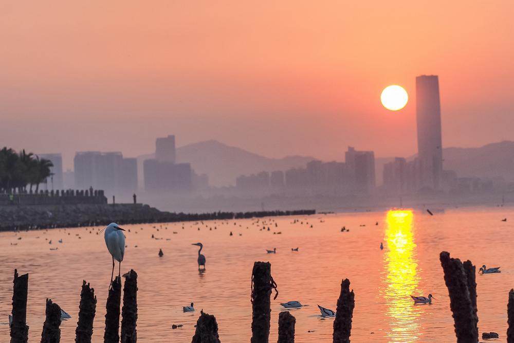邂逅深圳湾
