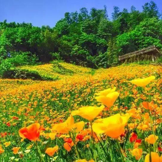 汶川,惊艳的美!