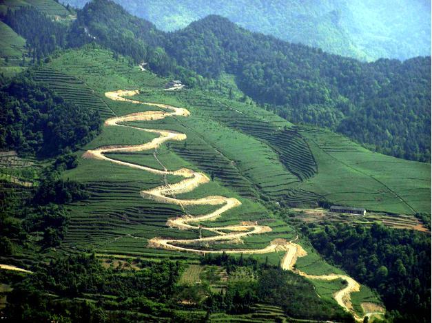 直到听周开迅说贵州茶文化,我才开始懂了茶