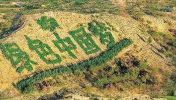 沙漠中崛起绿色希望——中国态度到中国贡献的当代样本