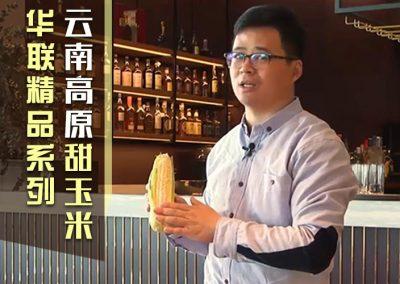 云南黄白粒高原甜玉米