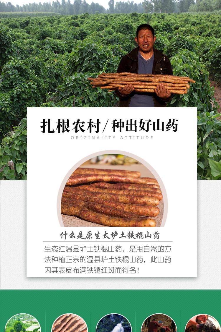 中国文化大拜年 百城文化大庙会年 货推荐—特级河南焦作新鲜铁棍山药(礼盒装)