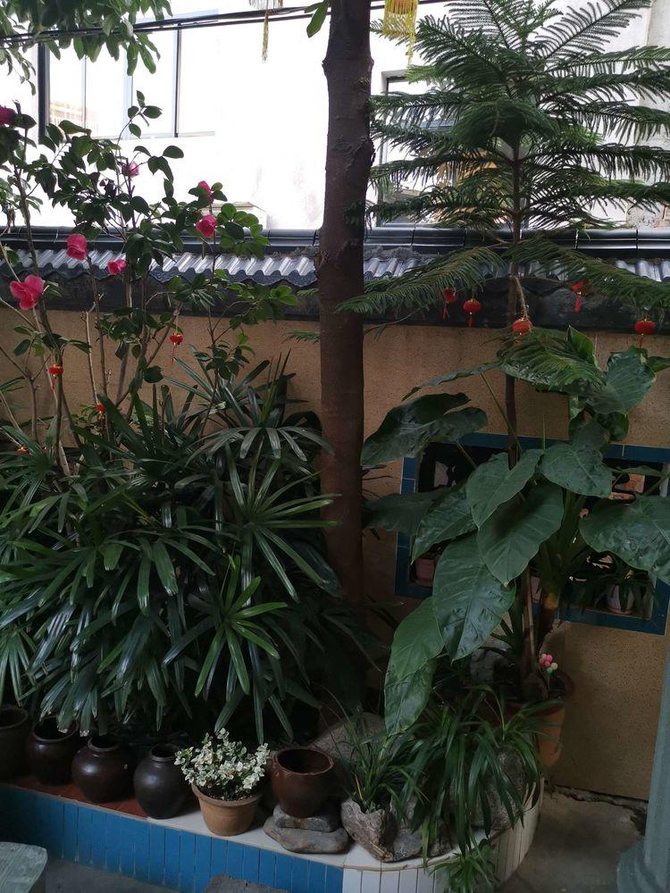 温馨的小院我的家