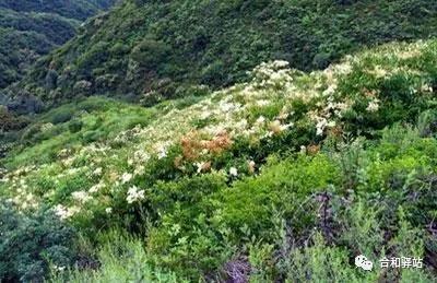 老峪沟的枣 ——《高老太的五重奏》夫妻篇老李记