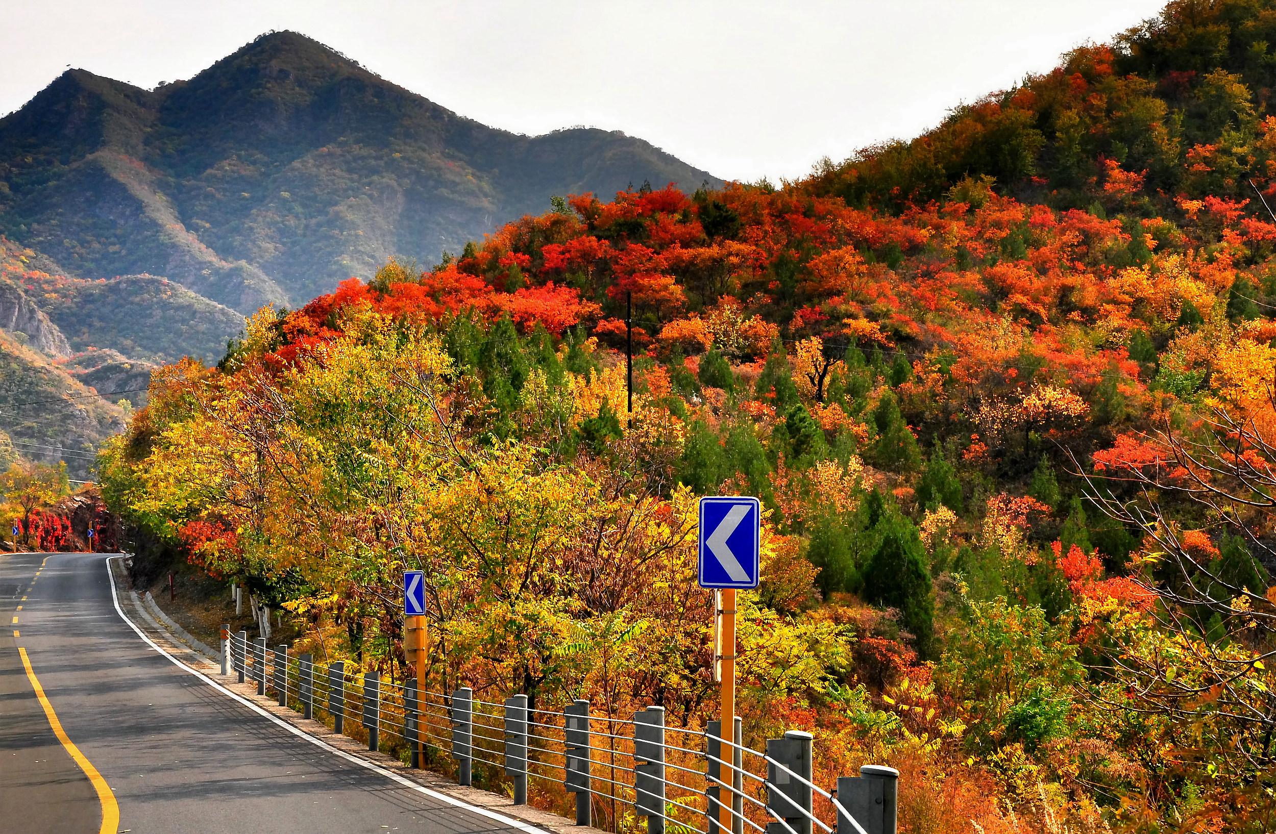 """开往""""最美的秋天"""":这10条自驾路线每一站都是醉人风景"""