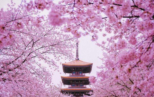 中国4大赏樱胜地,美得震撼,完全不比日本差!