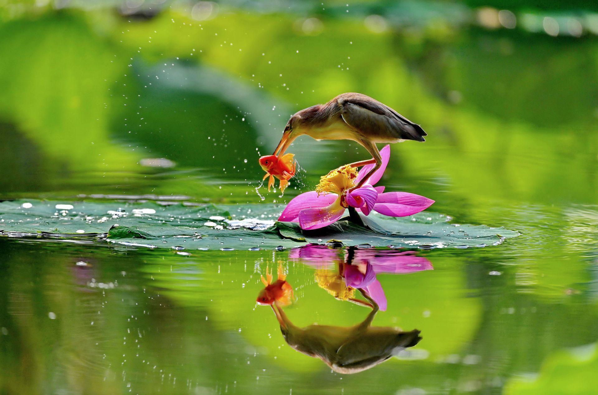 城市印象之河北唐山:水鸟戏荷