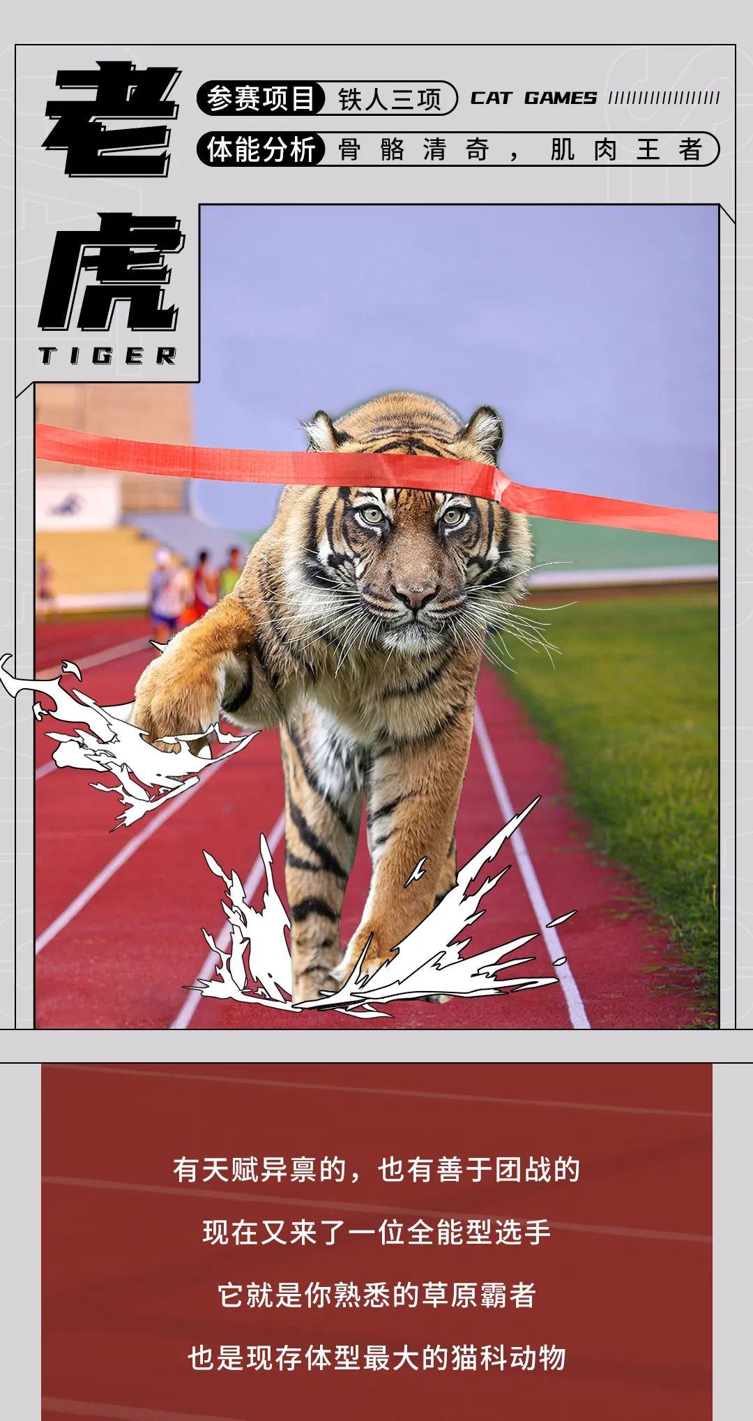 奥运会来了,动物界运动健将们也坐不住了