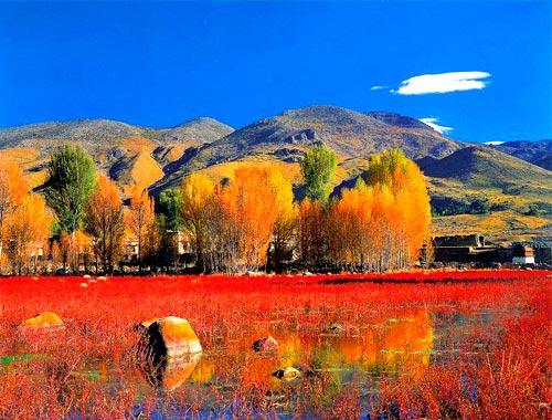 有一种美叫,稻城亚丁的秋天