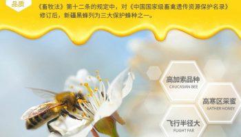 助力乡村-黑蜂蜂蜜