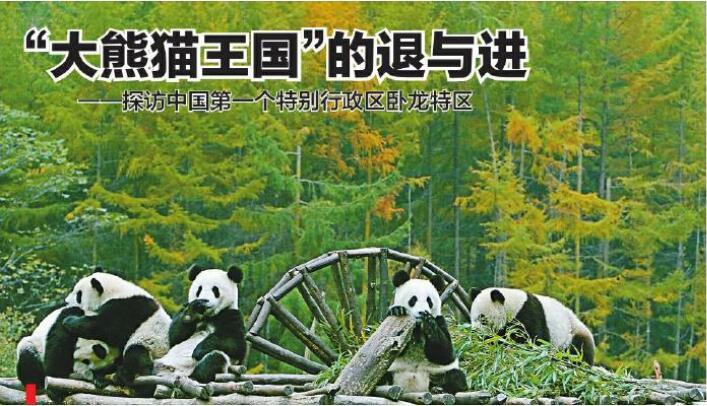 """""""大熊猫王国""""的退与进 ——探访汶川卧龙特别行政区"""