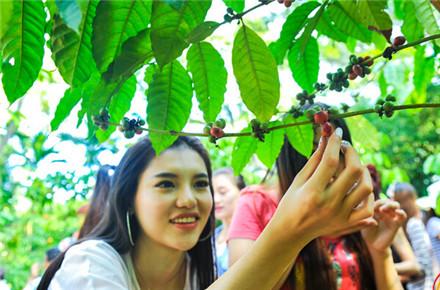 探秘兴隆咖啡谷:咖啡主题成共享农庄休闲农业新模式